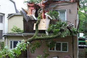 marietta tree removal services