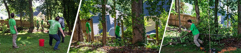 Marietta Tree Services, Tree Services Experts
