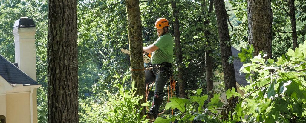 Tree Removal Services, Acworth & Marietta