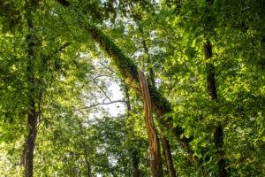 Tree Services in Marietta